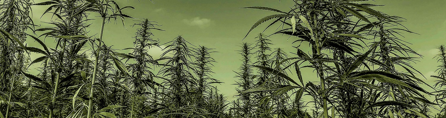 Contact us black and white fields of hemp