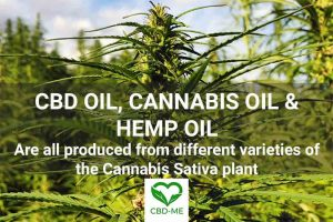 cbd faqs industrial hemp flower ' cbd oil cannabis oil and hemp oil' cbd me brand logo